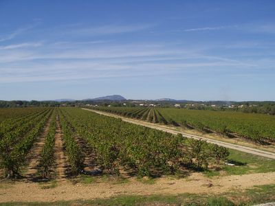 Photo for Gite Les Vignes near Montpellier and the sea