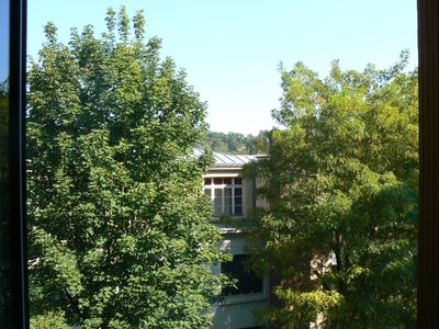 View of the trees from the one room apartment