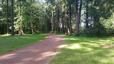Our driveway through the forest