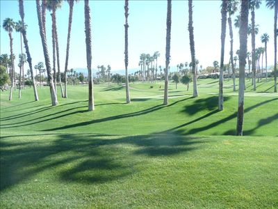 A look out our patio onto the 2nd hole, championship course with all the palms.