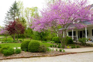 Outside Woodfield Hills Inn during the spring.