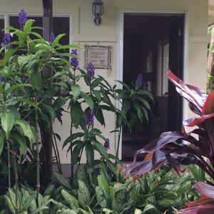 Unit has lush, tropical plants outside the door