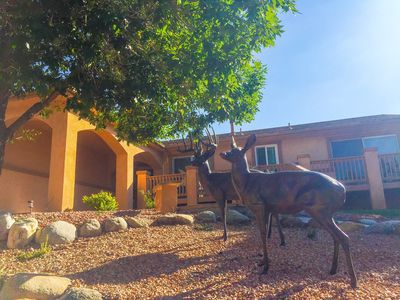 Photo for Beautiful Rancher in the Foothills of Colorado Springs - One Level Living