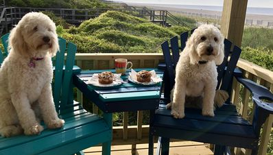 Photo for Holden Beach NC Updated Oceanfront 3 bed/2 bath that is dog and kid friendly