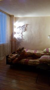 Photo for Onebedroom apartment in the city center