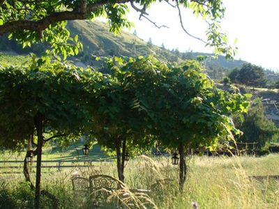 The view to the West from the cottage entry with a grape arbor for picnic shade