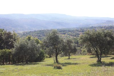 view of our olive grove from the house