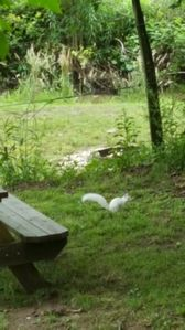 Photo for Back Yard Campground 2