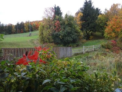 Beautiful Autumn colours from your private deck :)