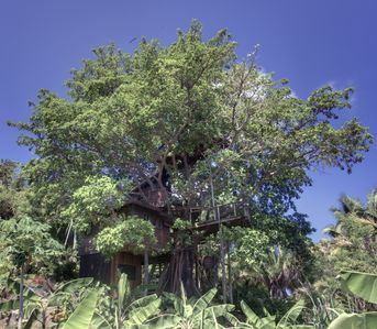 House in a fig tree