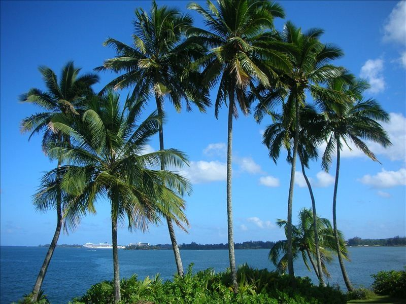 Hilo Bay Beauty.....Walking Distance to Downtown Hilo!