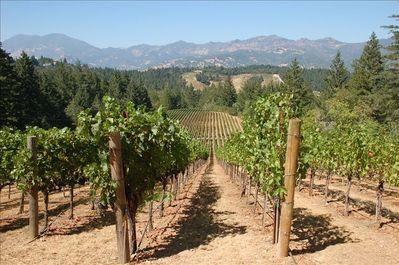Our vineyards in spring