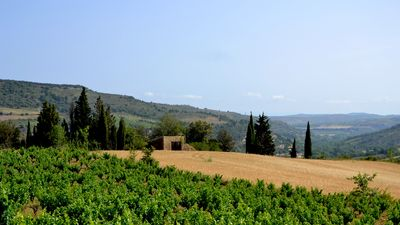 Photo for Bed and breakfast Vigneron du Domaine d'Alon