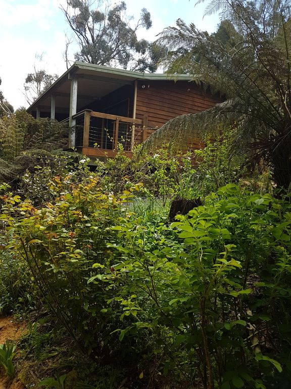 Tarkira Tree Rainforest Gallery Retreat