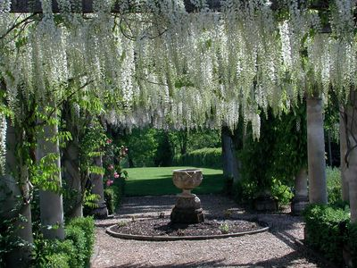 White Wisteria Walk