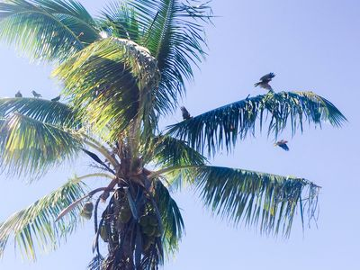 Parrots Perch front yard - The protected Abaco Parrot - Most happy soundtrack:)