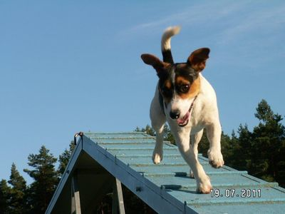Photo for Forsthaus Metzelthin - Holiday with dog