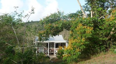 Photo for Eco Cabin in remote Caribbean Woodlands