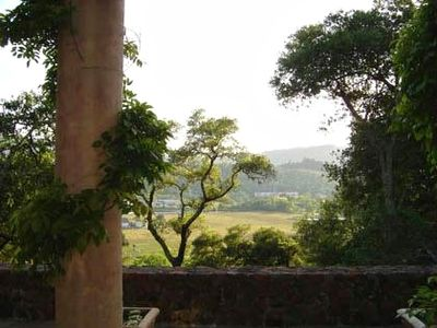 Vineyard View from Fabulous Terrace with 20' Columns covered in Wisteria