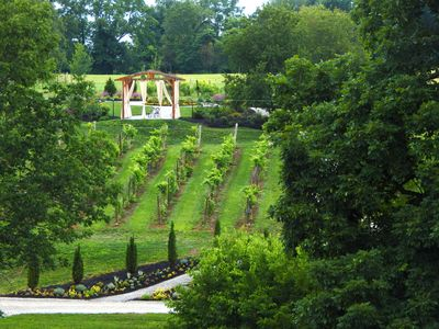 View of the vinyards and gardens