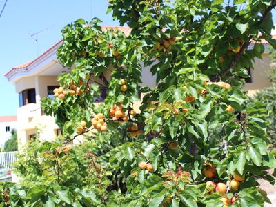 Photo for Comfortable rural apartment surrounded by gardens, fruit trees and tranquility.