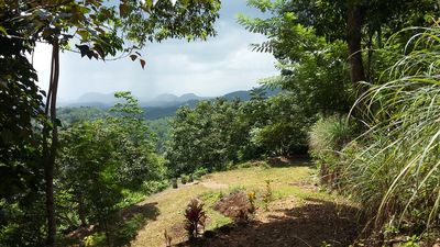 Photo for LIVE IN A TEA ESTATE : QUIET : GREEN : FOREST AT HIGH ELEVATION : SPLENDID VIEWS