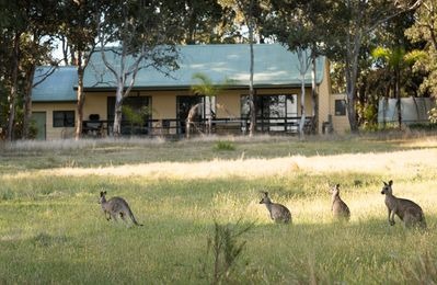 Breakfasts on the deck watching kangaroos are a highlight for our guests
