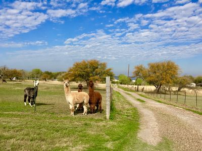 Photo for Book Your Mini Vacation on GBAR Alpaca Ranch Overlooking Lake Corpus Christi