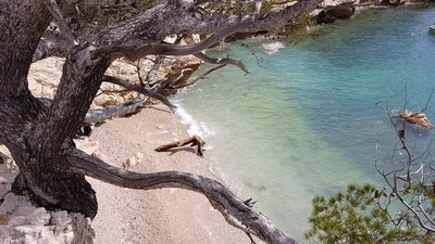 Photo for Art of Living, Sea, Cabanon, Calanques, Beaches