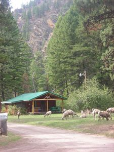 Photo for Forest Service Type Cabins  30 Miles outside Missoula--