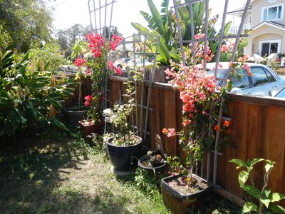 Photo for Monthly sublet, Pleasure Point beach cottage - walk to surf!