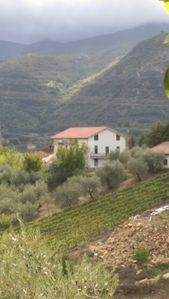 Photo for VILLA PASTORAL IN CILENTO BETWEEN SEA AND HILLS