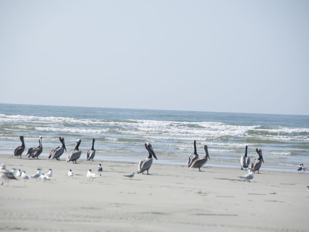 Beautiful Oceanview Property West end OIB!!