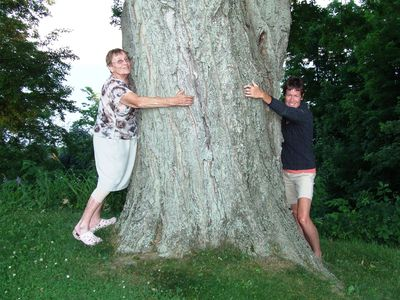 Treehuggers are most welcome!!  Enjoy our massive Sugar Maples on the property.