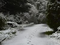 Our driveway in the snow