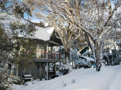 Milkwood in Snow