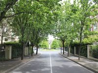 Tree lined drive way to your Melbourne apartment