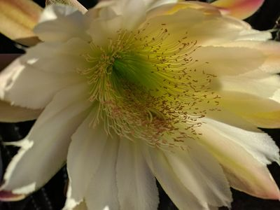 Soul Haven Cactus Flower