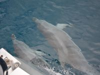 Plenty of friendly dolphins in the area