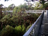 TreeTop Walk , touch the top of a tree