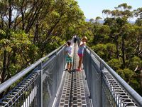 Famous Tree Top Walk , 15min from Bayside