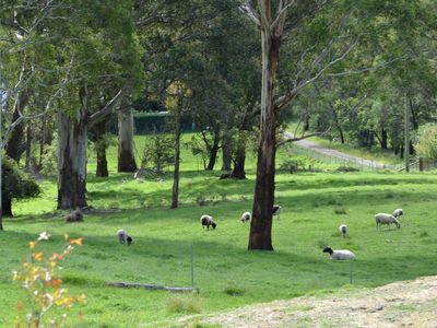The property is 8 1/2 acres with sheep