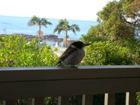 Visitor with view from the deck