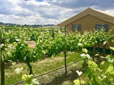 Nashdale Lane Glamping, relax and unwind in the vines