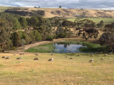 Sheep at Bungal, veiw of Moorabool Valley