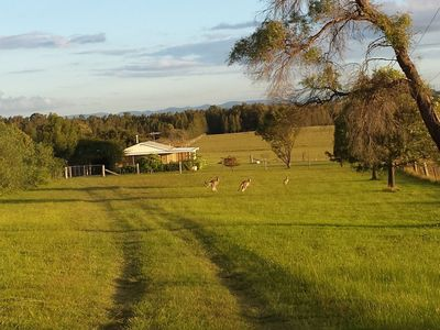 Summerfield front paddock