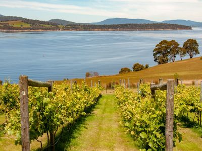 Vines down to Cygnet Bay & Bruny Island in the distance