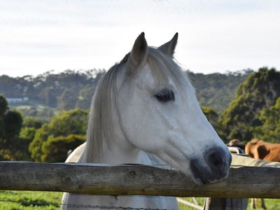 We have ponies and shetlands, which the kids can enjoy guided rides on
