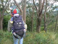Family bushwalking in nearby Mt Royal National Park