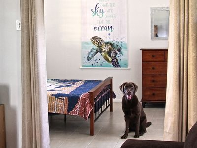 Destiny Awaits - Pet Friendly in DINGO BEACH